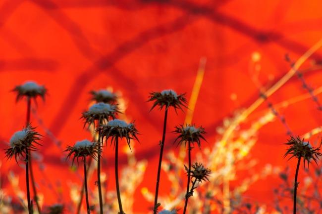 Barrios rojos - 21