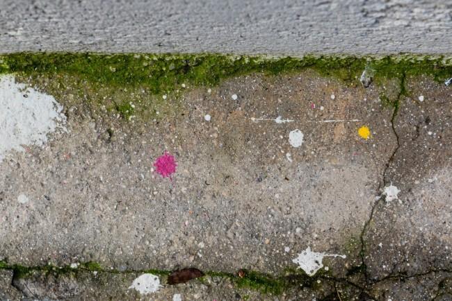 Palomas y paredes (11)