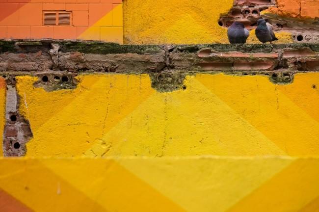 Palomas y paredes (2)
