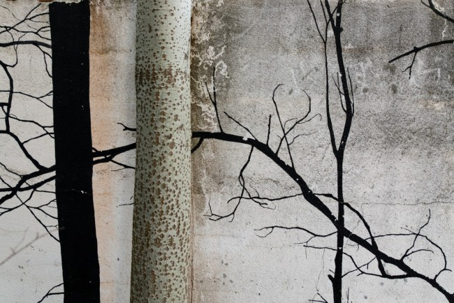 Bosques (15)