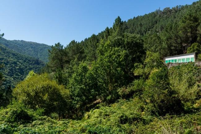Reforestaciones (2)