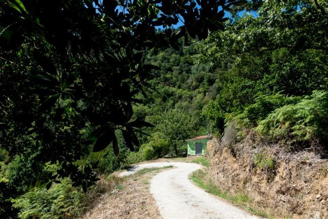 Reforestaciones (4)